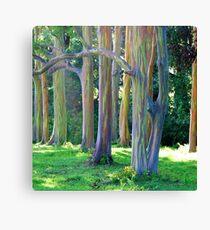 Rainbow Trees of Maui Canvas Print