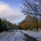 FIRST SNOW, LETTAFORD, DARTMOOR, DEVON by FieryFinn77