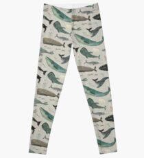 Legging Canto de la ballena gris