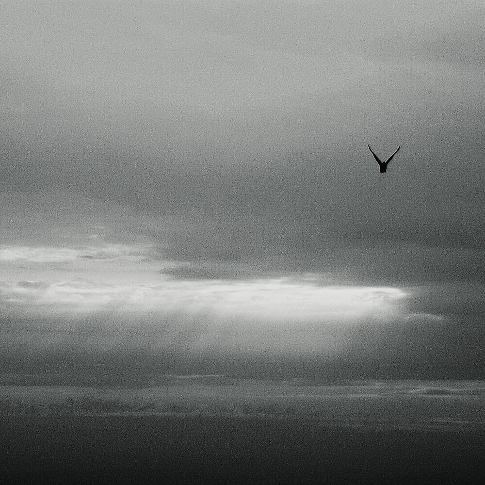 flying solo... by StefaniaC