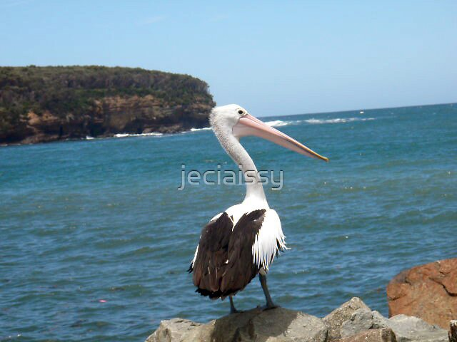 Pelican On Rocks (Issy age 5) by jeciaissy