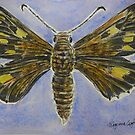Altona Skipper Butterfly 1 by Virginia  Coghill