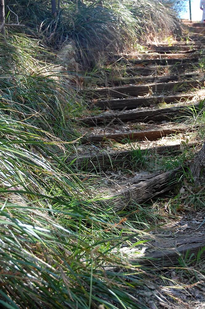 Mystical Stairway by Hayley Solich