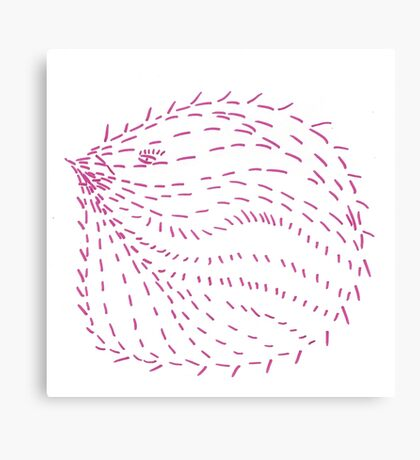Echidna Rolling Up Canvas Print