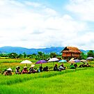 Under my umbrella- in the rice fields by oddoutlet