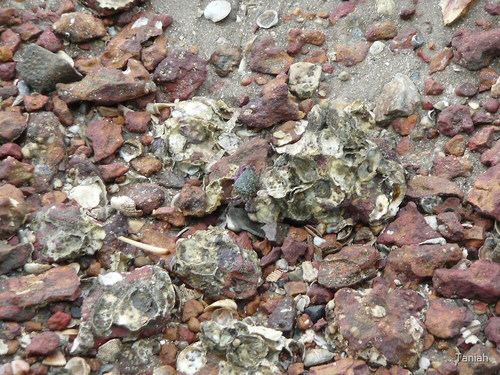 spot the mud crab by Taniah