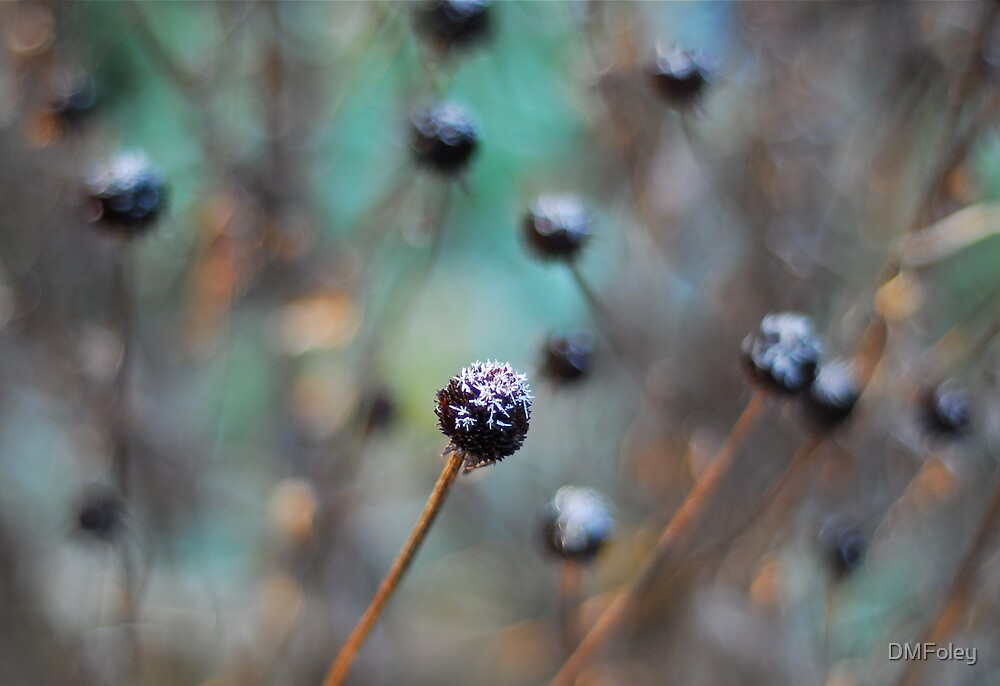 Winter Susans by DMFoley
