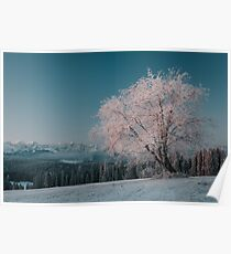 First light - Landscape and Nature Photography Poster