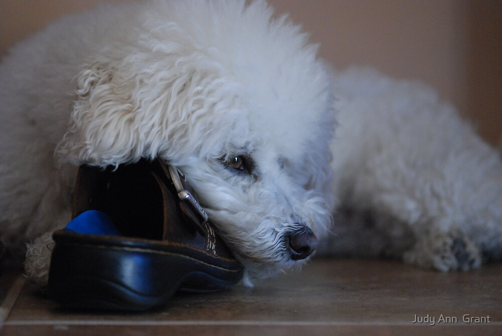 Mom's Shoe  by Judy Grant