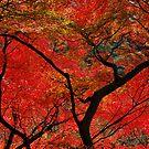 Red leaves, Japan by sideways