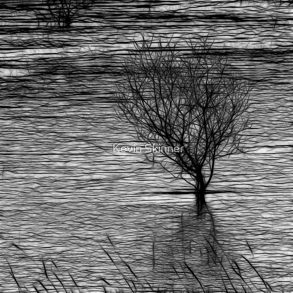 Frozen Tree  by Kevin Skinner