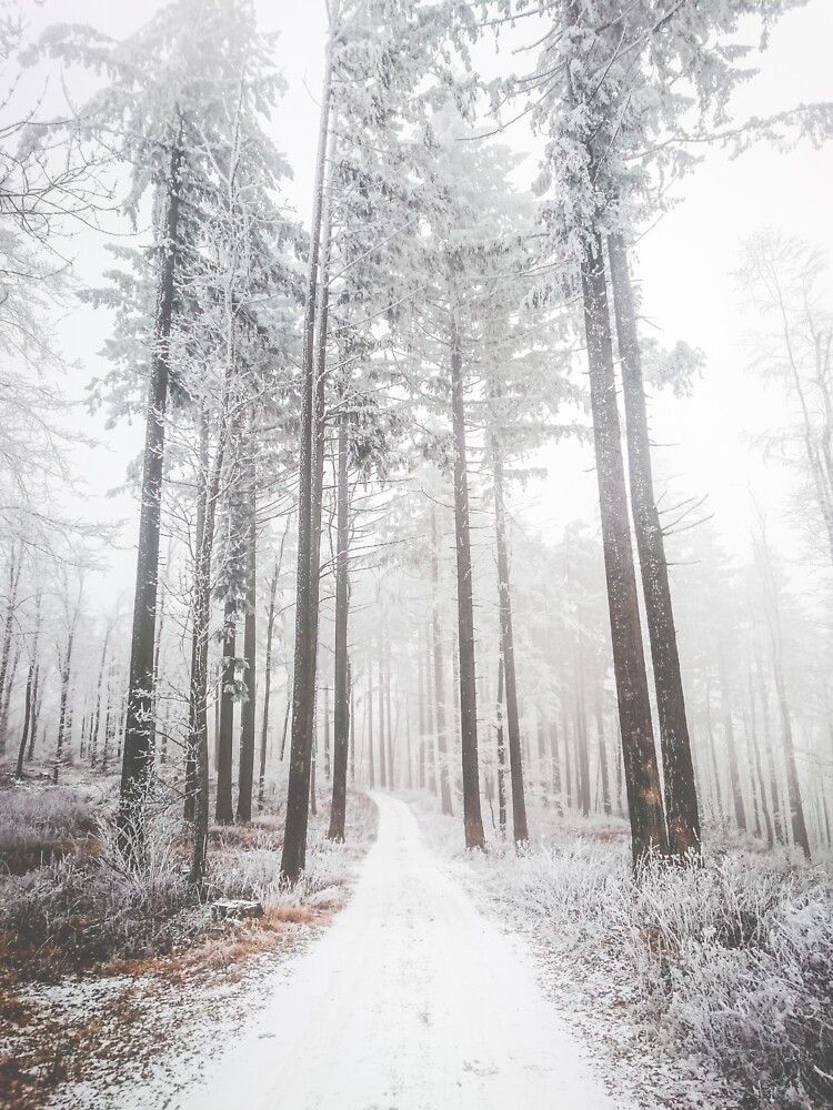 Mysterious road in a frozen foggy forest by patriklovrin