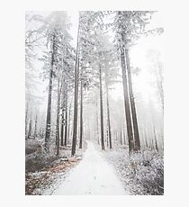 Mysterious road in a frozen foggy forest Photographic Print