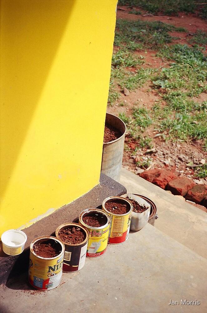 Starter Plants by Jan Morris