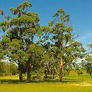 Farmscape #1, Warragul District, Gippsland, Australia. by johnrf