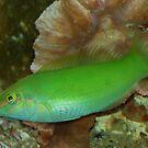 Toxic green fish by loiteke