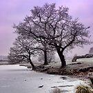 New Year Frost by Ann Garrett