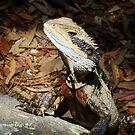 Posing Eastern Water Dragon by Of Land & Ocean - Samantha Goode
