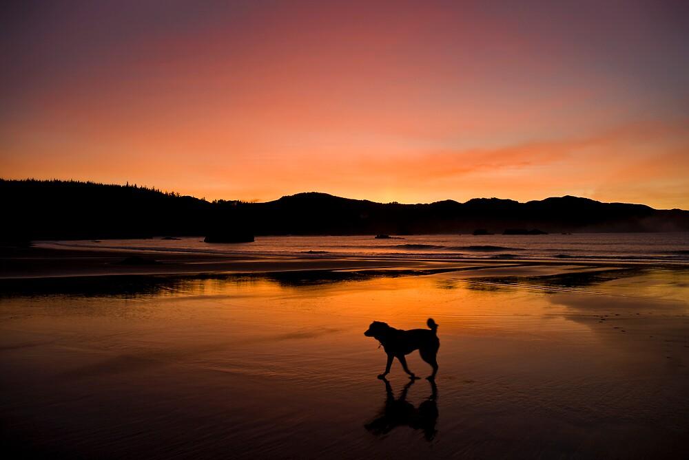 Dawn Patrol by Randall Scholten
