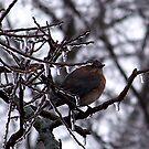 Cold Little Bluebird by Glenna Walker