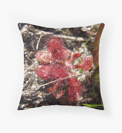 Round leaf Sundew Throw Pillow