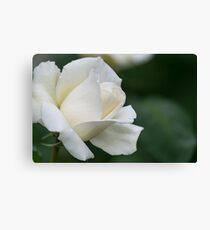Tineke Rose Canvas Print