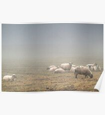 Lost Sheep Poster