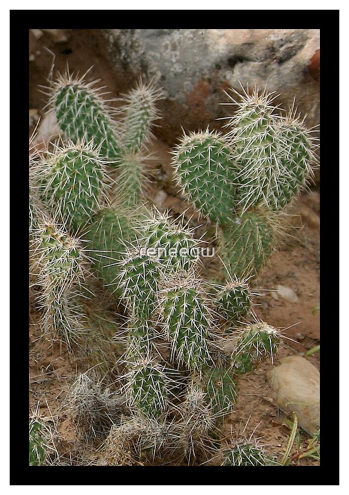Cactus by reneegw