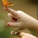 Little Hands And Butterflies by CarolM
