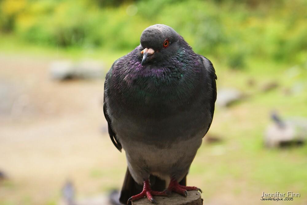 Pigeon by Jennifer Finn