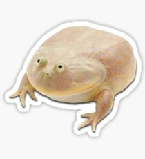 It is Wednesday my dudes frog Sticker