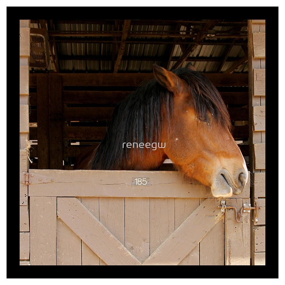 horse by reneegw