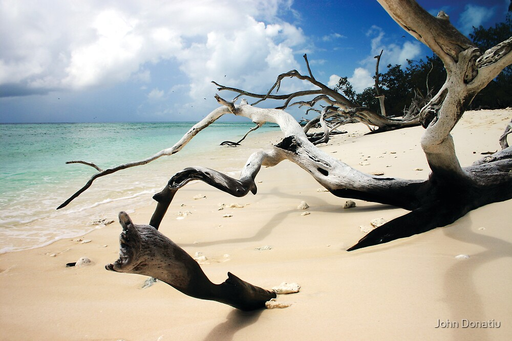 Dead Wood in the Sand by John Donatiu