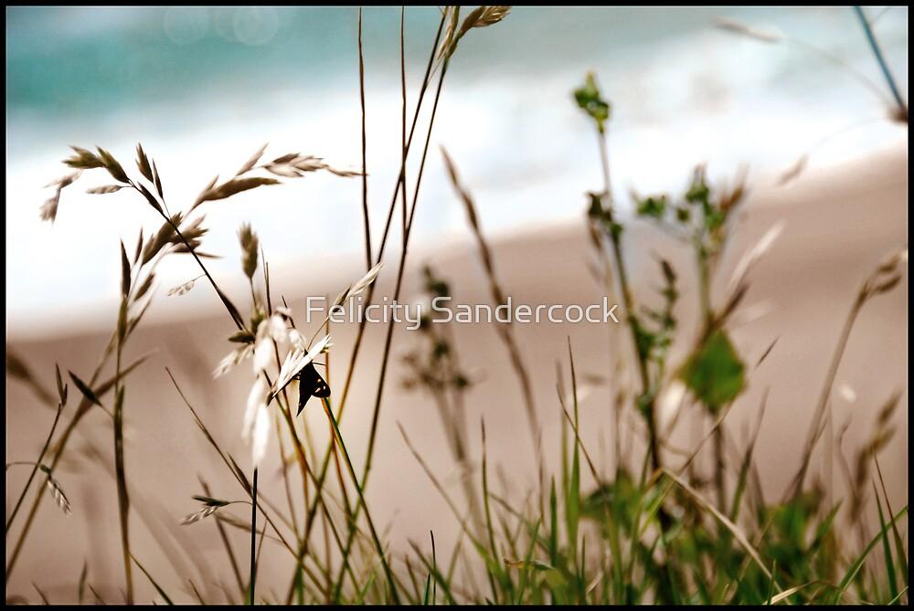 bug on the beach by Felicity Sandercock