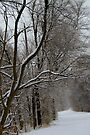 Counrty Road after a Snowfall.................... by Larry Llewellyn