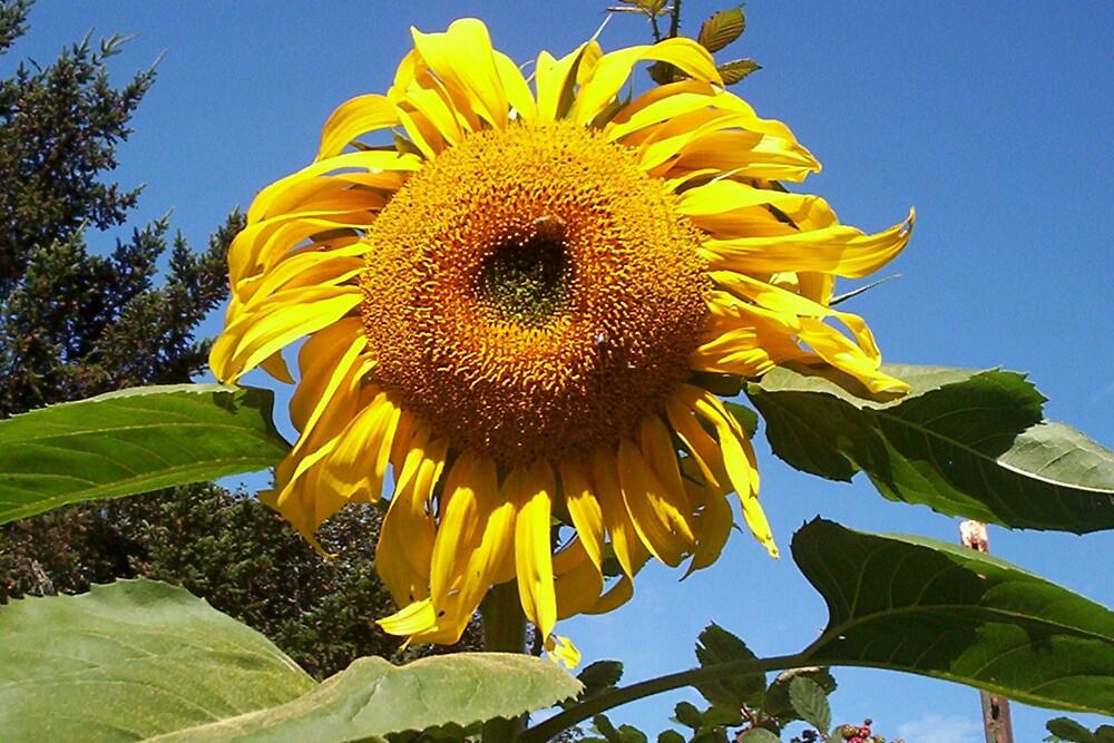 Sunflower Smiles by Kamalanirose