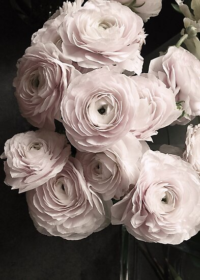 Blush Pink Roses Bouquet Rose Flowers Photographic Prints By
