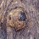 Tree Bark Abstract 1 by Pauline Tims