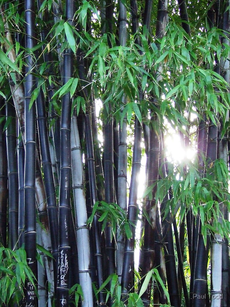 Bamboo by Paul Todd