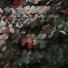 Trefoil Species v.2 by tropicalsamuelv