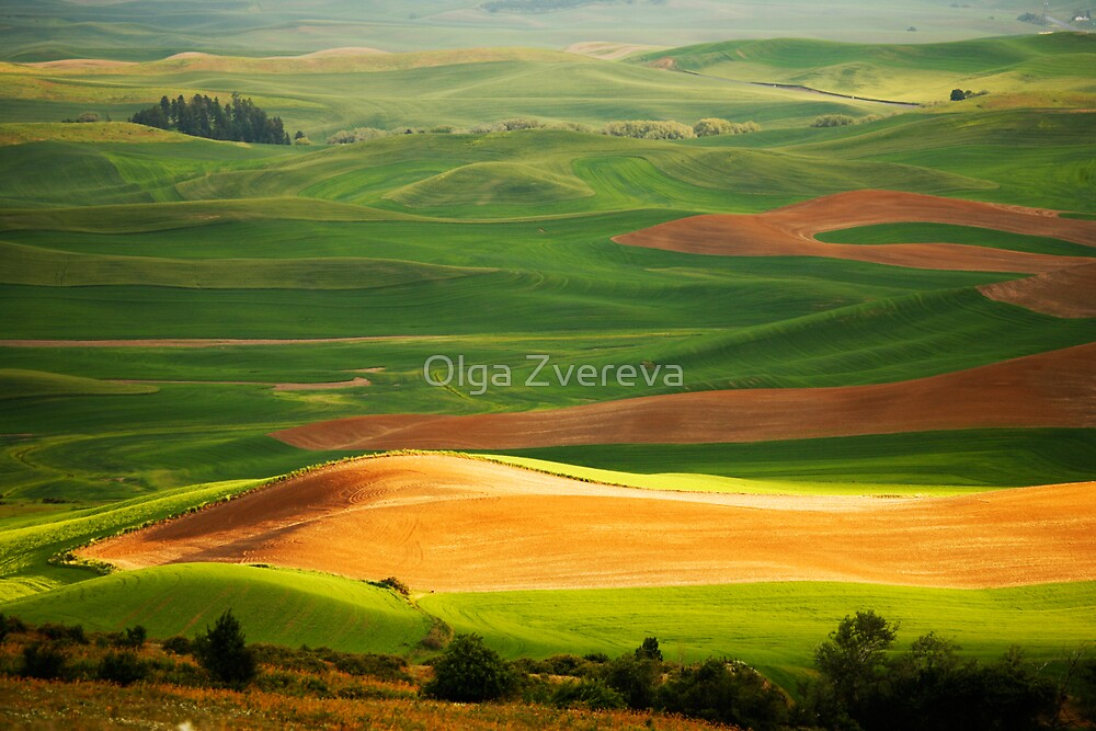 Palouse by Olga Zvereva
