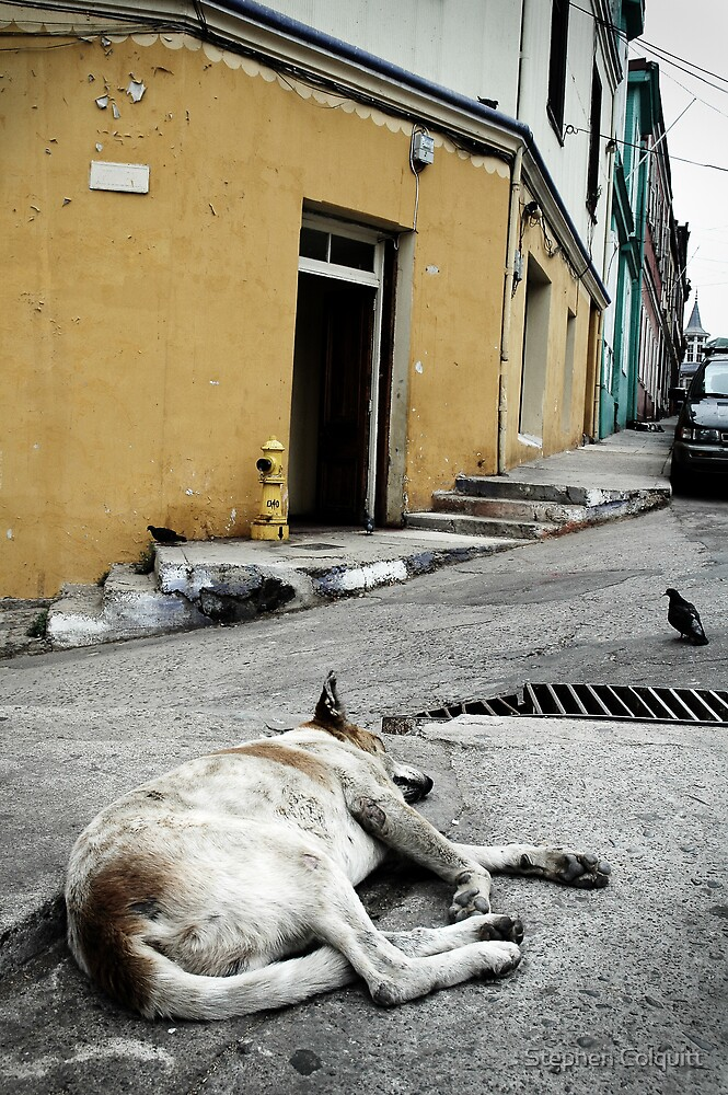 Sleeping dogs lie... by Stephen Colquitt