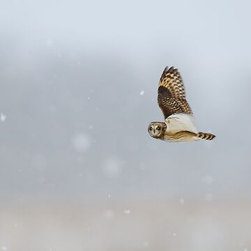 Short Eared Owl In The Snow Storm by locustgirl