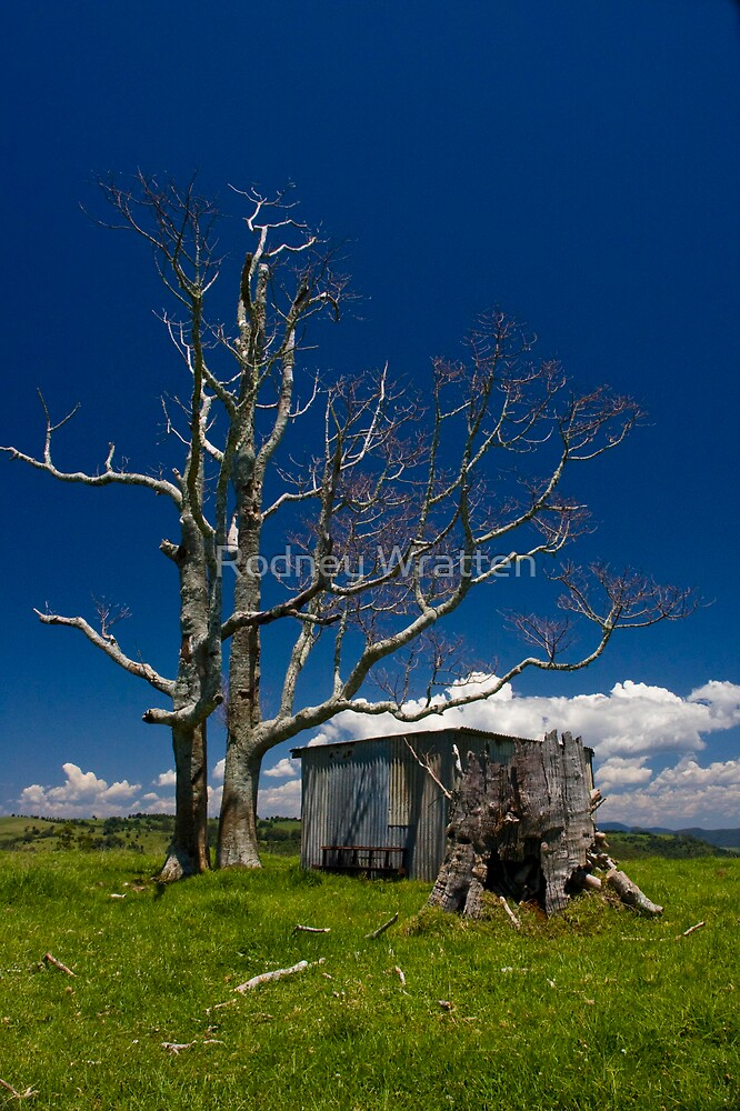Dead Trees,Clouds and Green Grass by Rodney Wratten