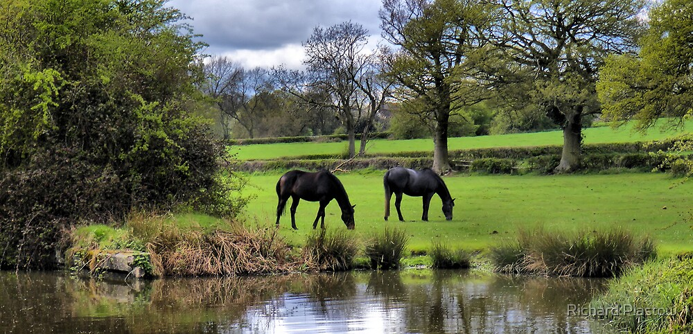 horses in a field by Richard Plastow