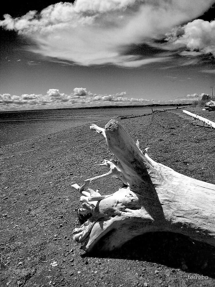 Tree On The Beach  by terrebo