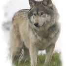 Lone Wolf by timbrewolf