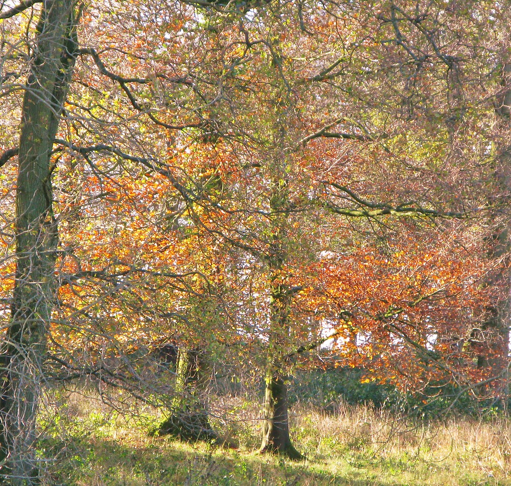 Autumn scene by richalfa156