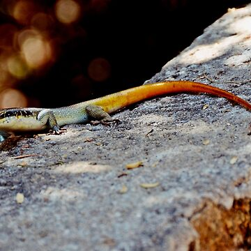 Yellow Tailed Lizard by heinrich