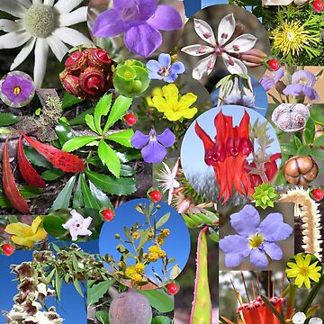 Colourful plants by HaniaAnia